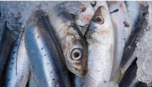 Gefrorene, gefrostete Köderfische